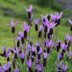 Ruta botánica por el Valle del Tiétar