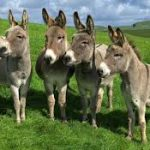 Actividad con burros