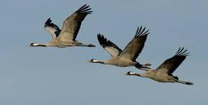 Ruta ornitológica a las orillas del río Tiétar